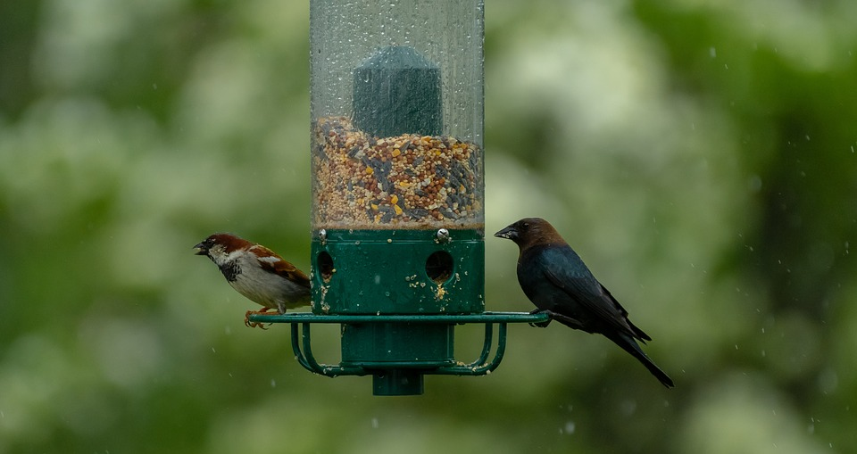 Best wind & snow proof bird feeder