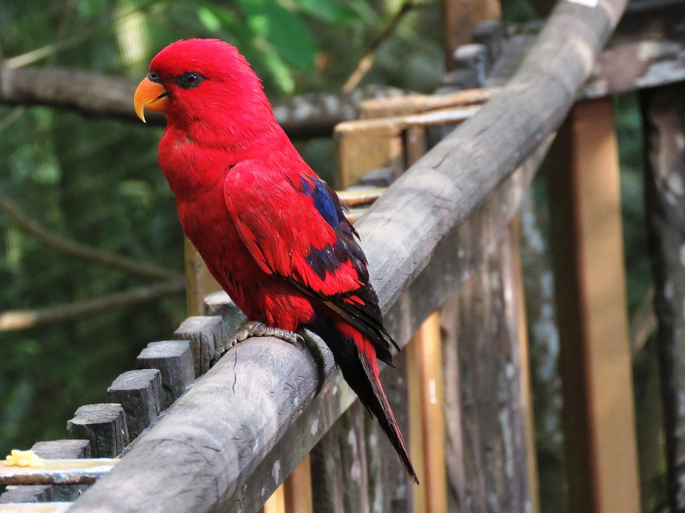 Getting started: what do you need for bird watching