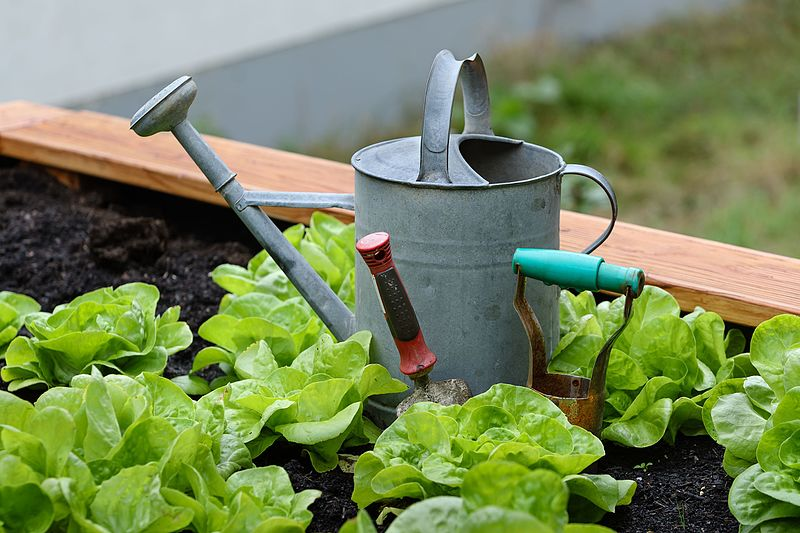 The 2019 definitive guide to [The Benefits Of Gardening as a Hobby ]