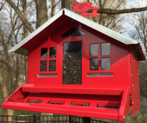 red perky Pet​ bird feeder