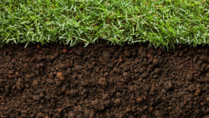 Best Soil Conditioner For Lawns